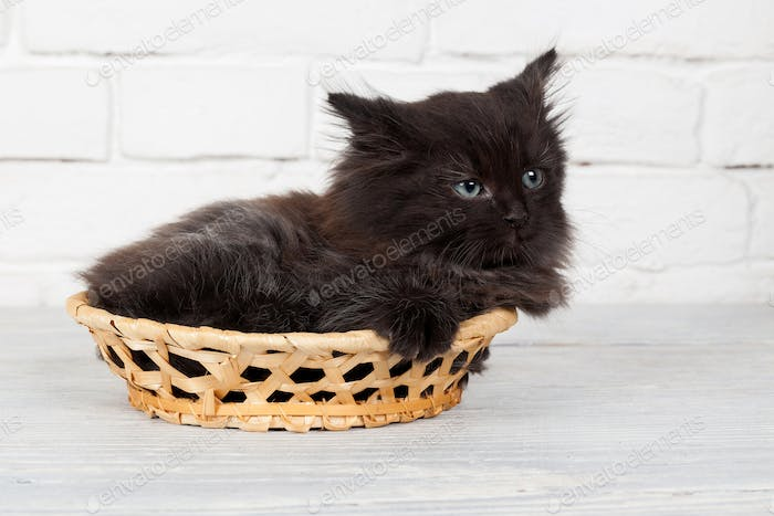 Young black fluffy kitten in the basket