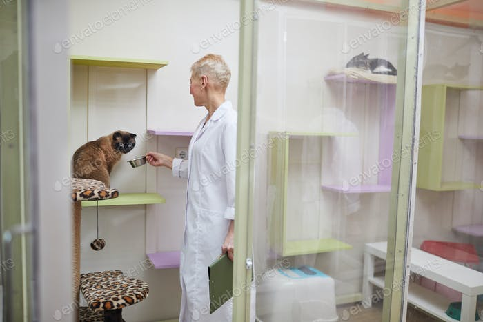 Vet doctor caring of cats