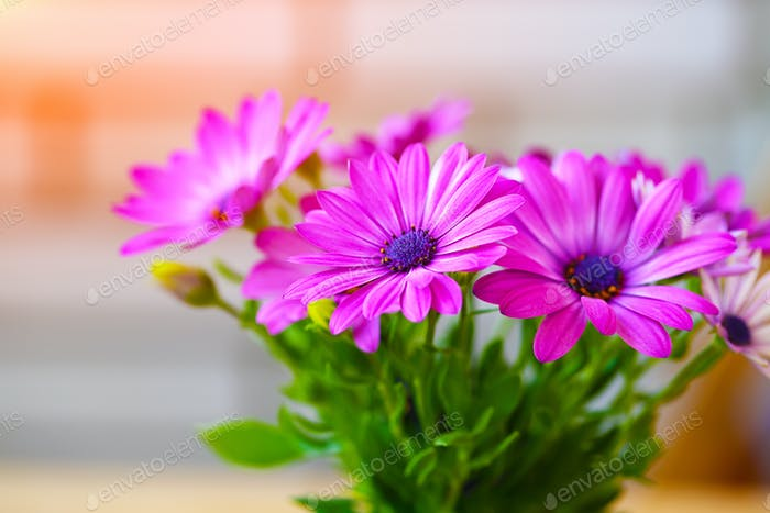 Vibrant beautiful purple daisies.