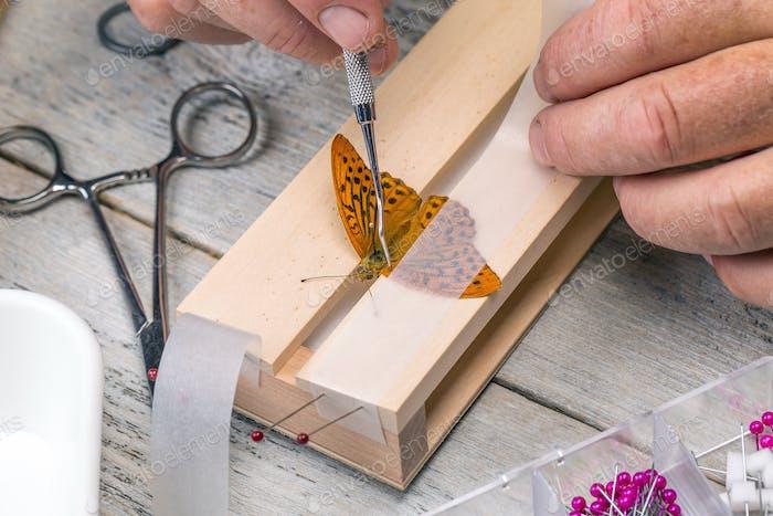 Mann spreizende Schmetterlingsflügel