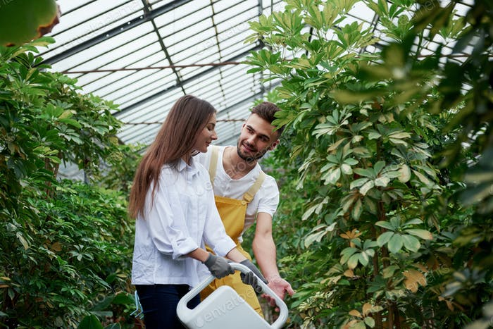 Guy teaches girl. Young couple of workers in the greenhouse with water canister