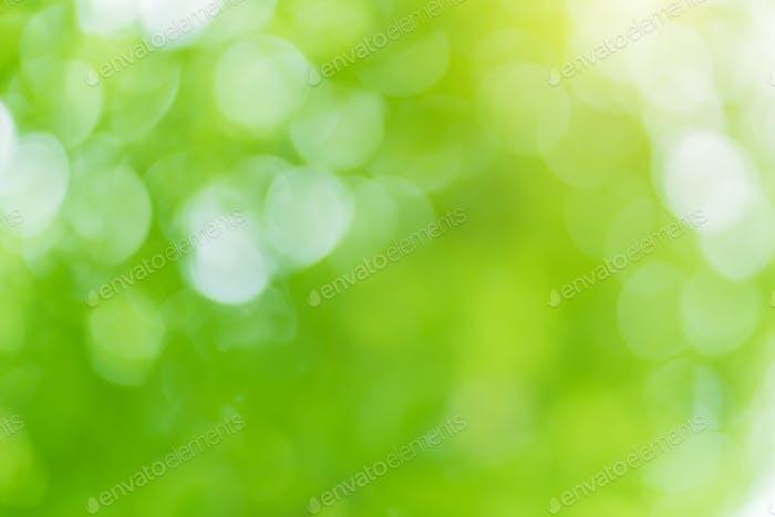 Bokeh foliage background.