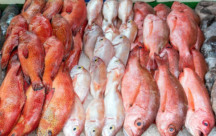 Red snapper and red mullet for sale
