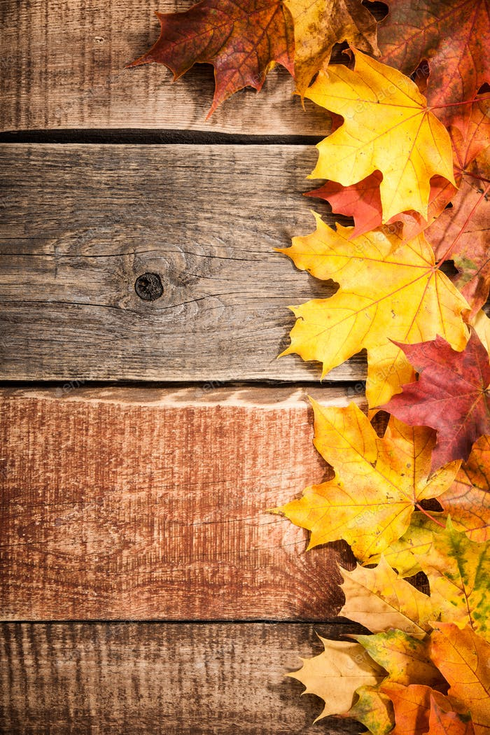 autumn background with maple leaves photo by ff photo on envato elements