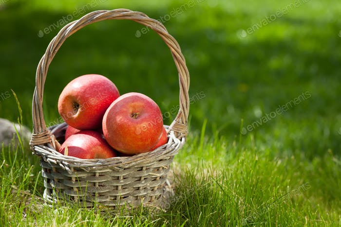 Frische Garten rote Äpfel