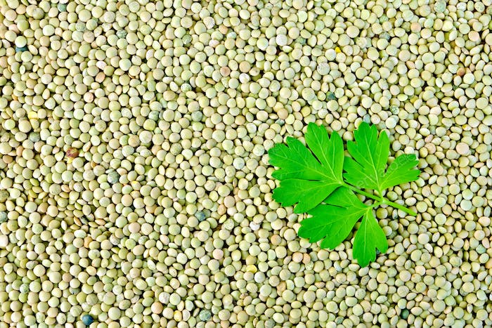 Lentils green with parsley