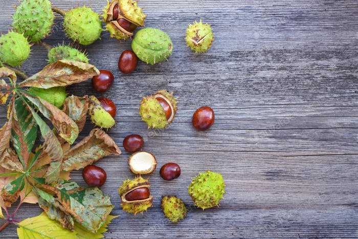 Chestnut with dry leaves on old wooden background with copy spac