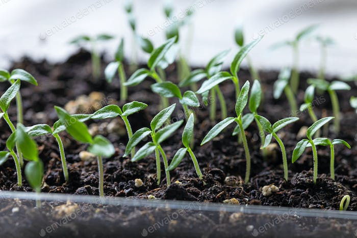 group of small green sprouts
