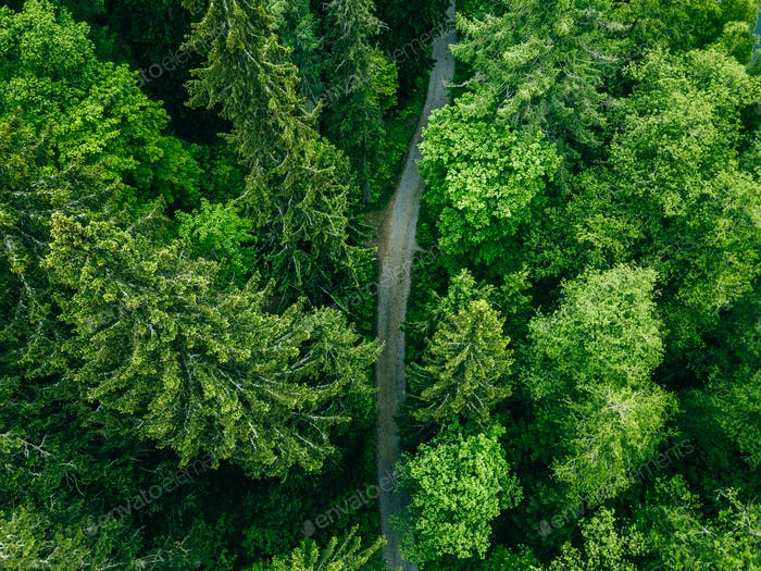 Aerial top view of country road in green summer forest. Rural landscape in Finland.