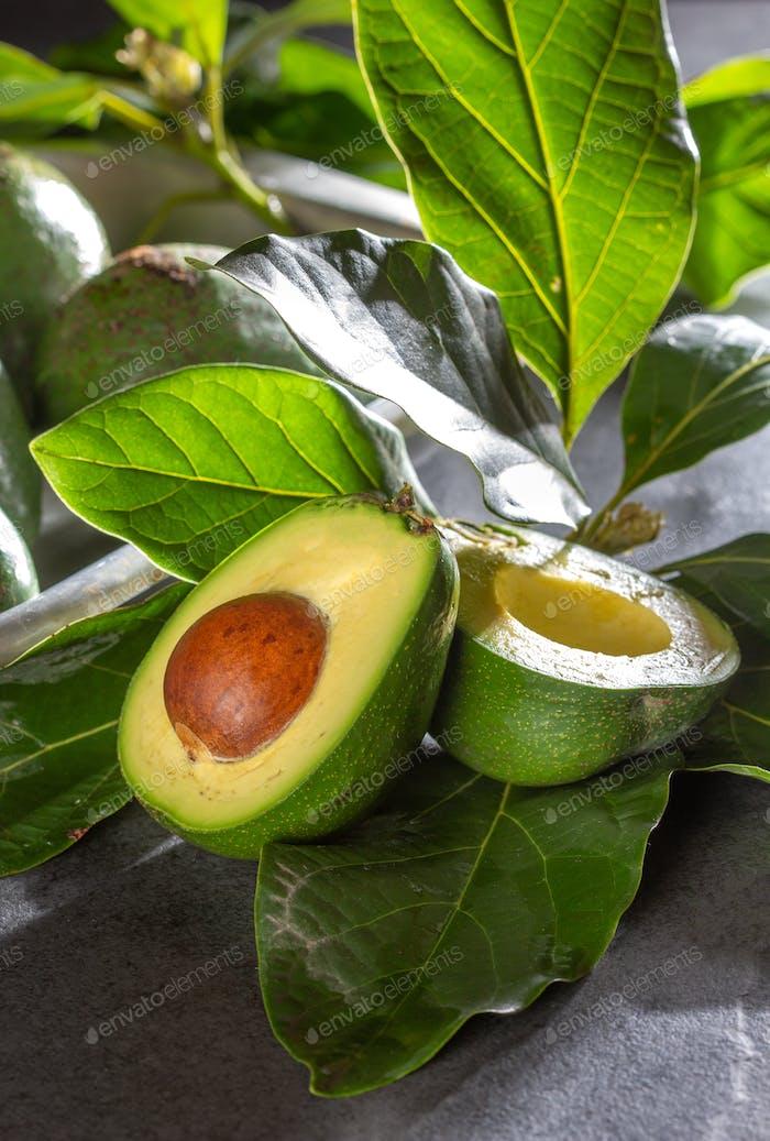 Fresh avocado wish avocado tree leaves. Close up.