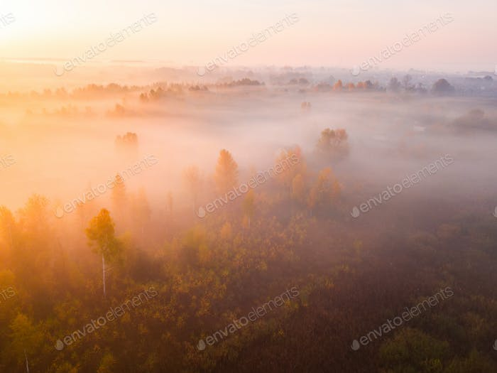 Forest in the fog at sunrise. View from drone.