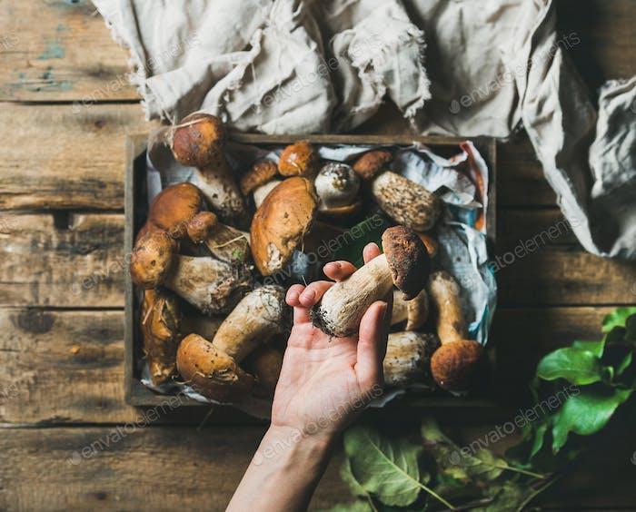 Die Hand der Frau hält eine von frisch gepflückten Steinpilzen