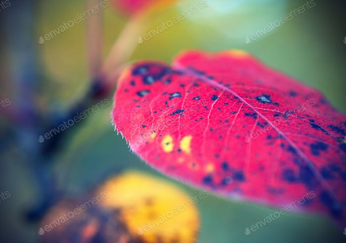 Bright autumn leaf