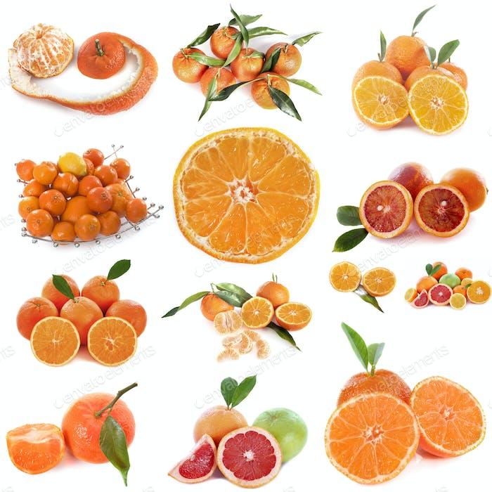 citrus fruits in studio