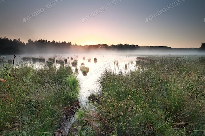 calm sunrise on misty moor