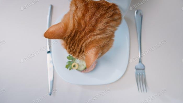 Gato rojo comer delicadeza