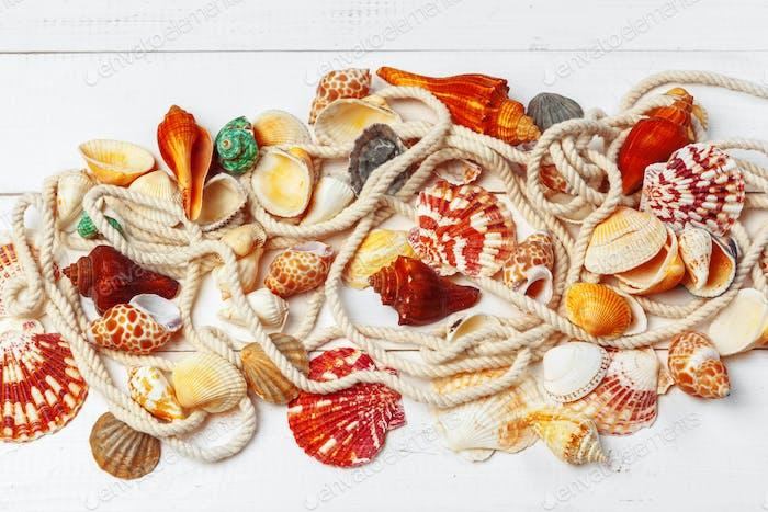 seashells on wooden background. close up. creative photo