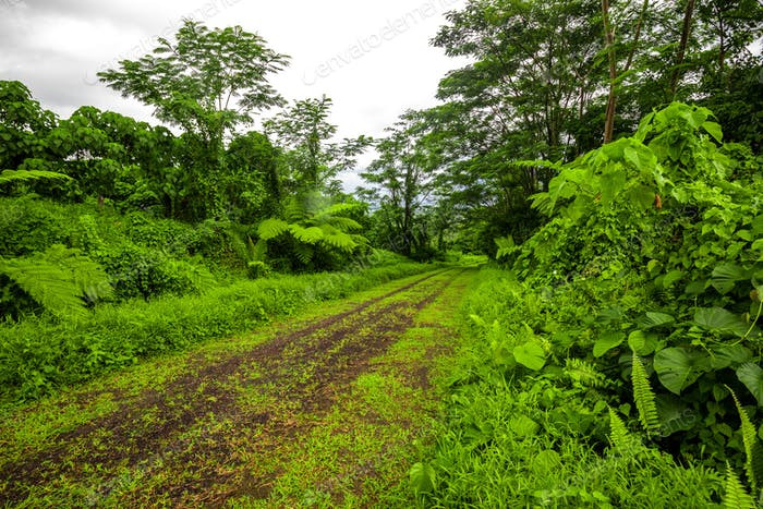 Road deep in the tropical dense vibrant lush forest