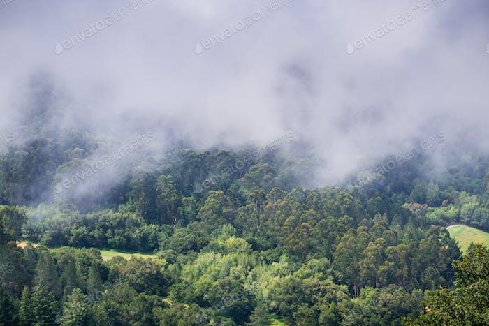 Retreating fog, San Francisco bay area, California