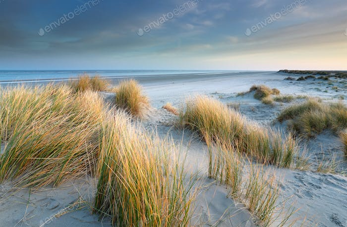 sand dunes on windy North sea beach