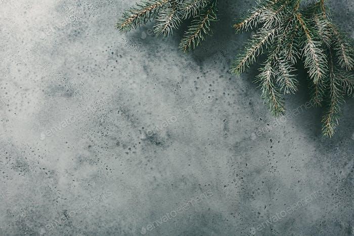 Tannenzweige auf grauem Hintergrund mit Kopierraum
