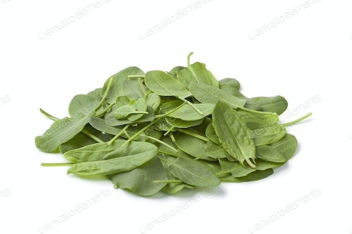Frische Sauerampfer Blätter