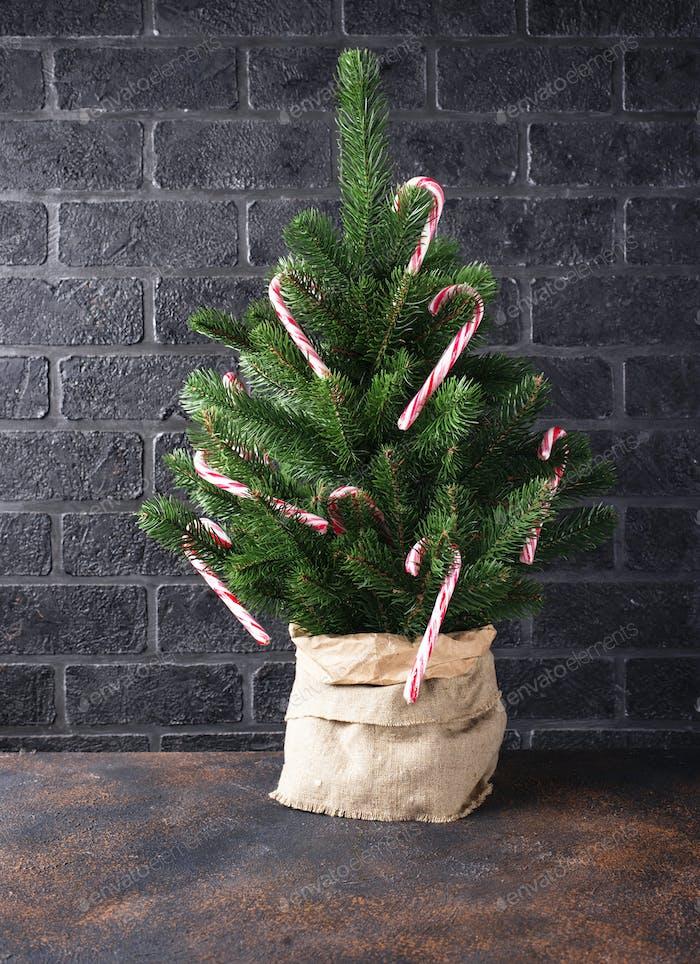 Weihnachtsbaum mit Zuckerrohr verziert