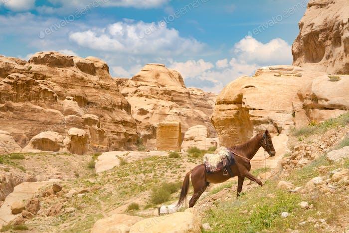 Horse in Petra - Jordan