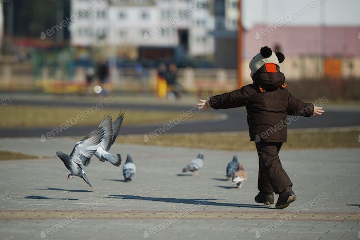 little boy catching and playing with pigeons