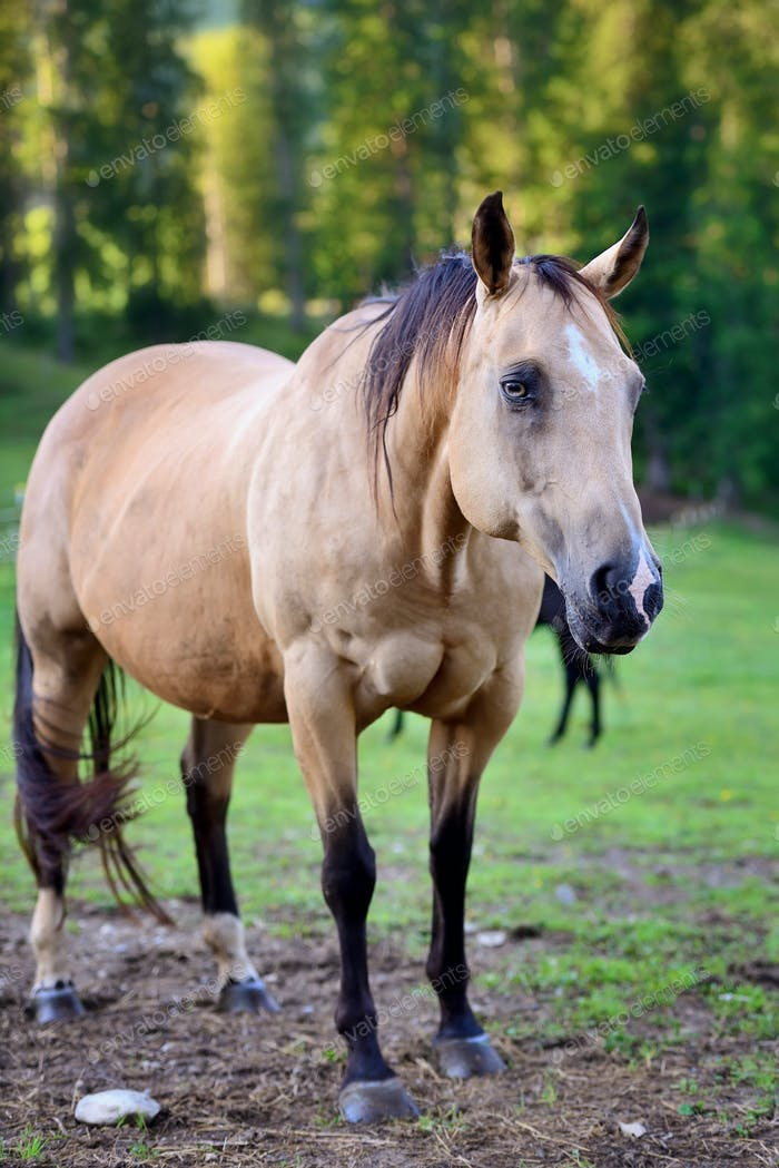 Horse on nature. Portrait of a horse, brown horse