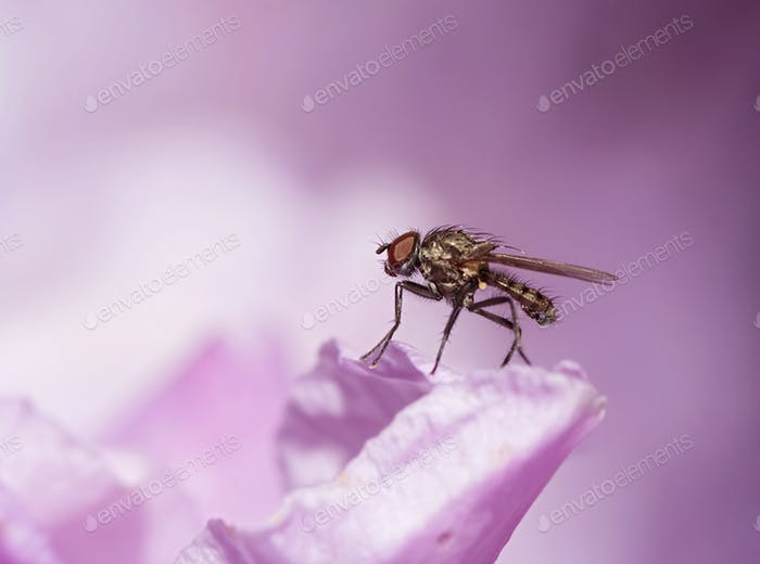 small fly on the bloom