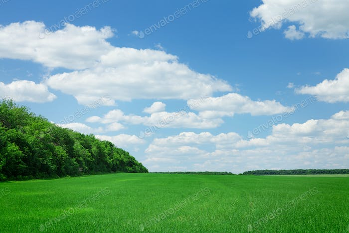 Countryside field and forest
