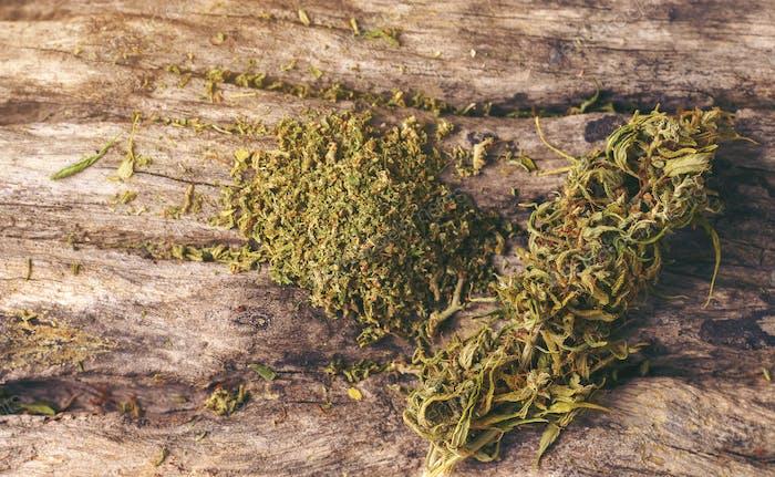 dried cannabis medical marijuana
