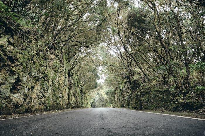 Scenic road in the Anaga UNESCO biosphere reserve, Spain.
