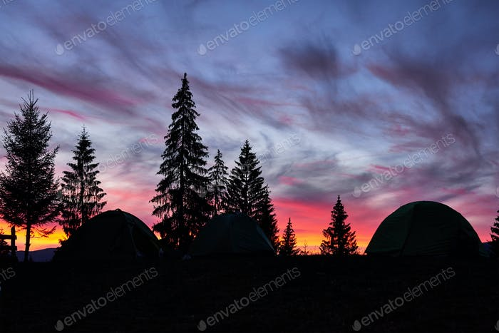 Majestic sky, pink cloud against the silhouettes of pine trees in the twilight time, tents on the