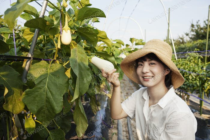 Japanese woman wearing hat standing in vegetable field, picking fresh aubergines, smiling at camera.