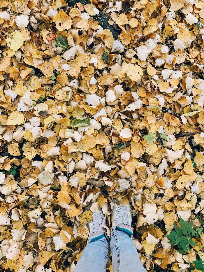 Girl legs in yellow leaves on ground,  top down view