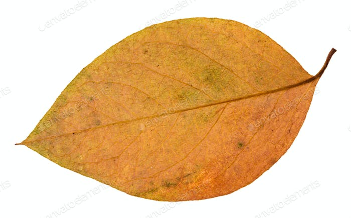 back side of red and yellow leaf of apple tree