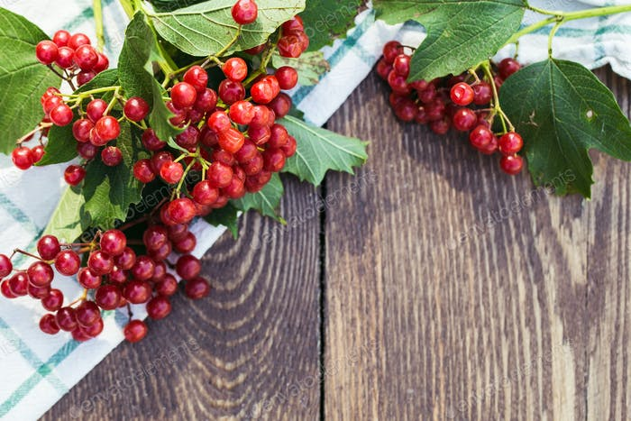 Viburnum berries with bunches. Viburnum on wooden background