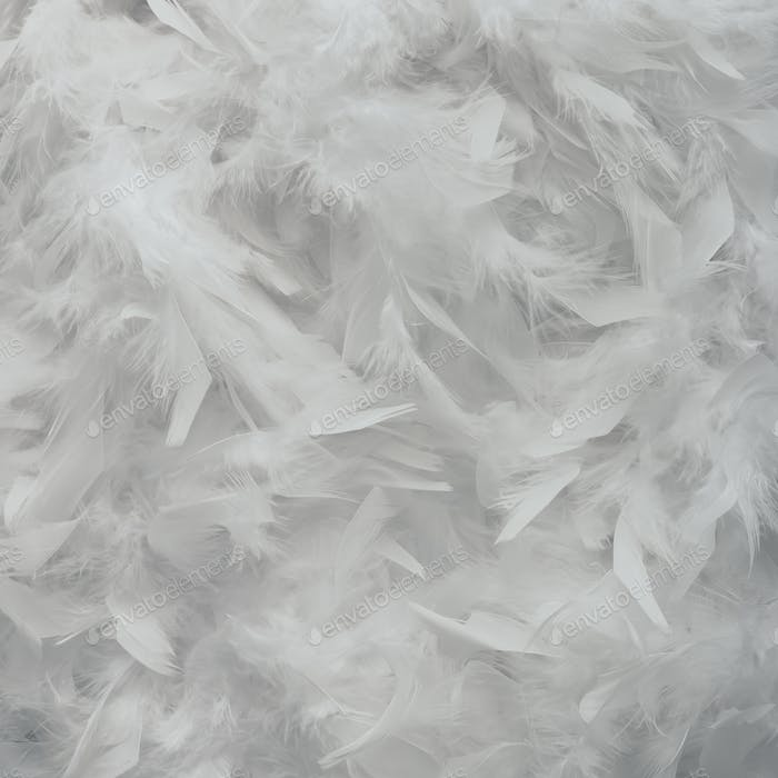 Bright white feather texture. Flat lay minimal concept.