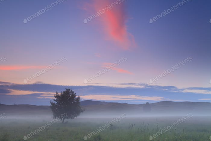 Tree on the field in misty morning in spring