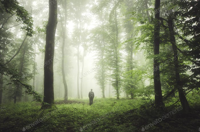 man in green forest with fog