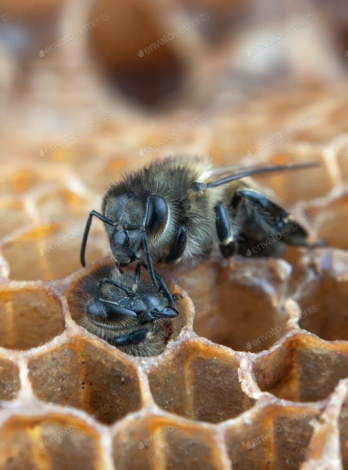 looks bee