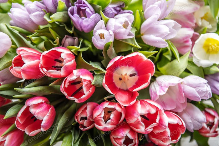 Fresh Tulips Flowers Arrangement Nature Refreshment Background