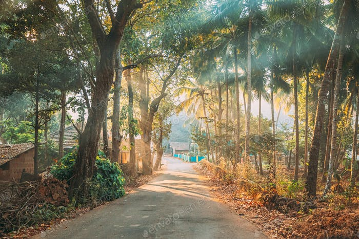 Goa, India. Country Road Through An Indian Village. Morning Dawn Haze Enveloped Palm Trees