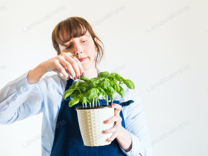 Junge Frau wächst frisches Basilikum zu Hause