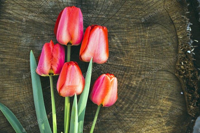 rote Tulpen auf dem hölzernen Hintergrund