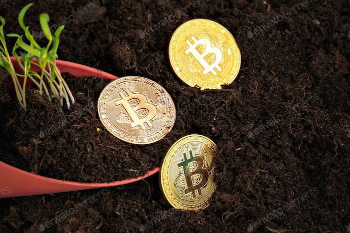 Sprout plant y bitcoin, crecimiento de la criptomoneda bitcoin
