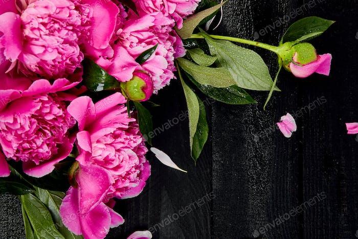 Beautiful pink peony flowers