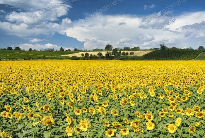 Country landscape near Castell'Arquato
